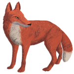 Illustration of a fox