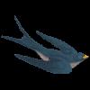 Bird-R250png